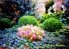 M-J's Princeton Garden with Boxwood, Impatiens and Ivy