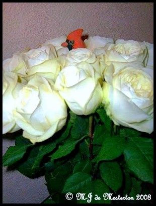 cardinal_and_white_roses_copyright_m-j_de_mesterton