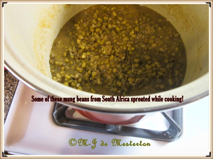 Mung_Beans_Sprouted_While_COOKING_by_M-Jeanne_de_M